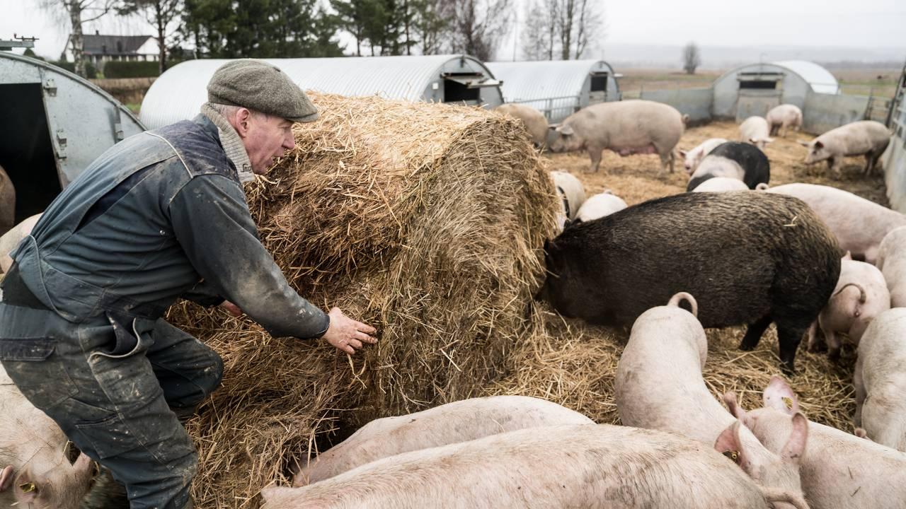 Heinrich Jung i grisebingen