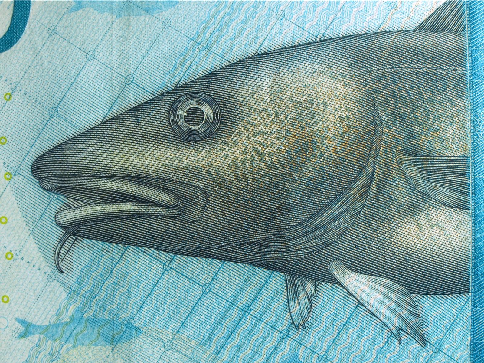 Hovedmotivet på 200-kroneseddelen er en torsk.