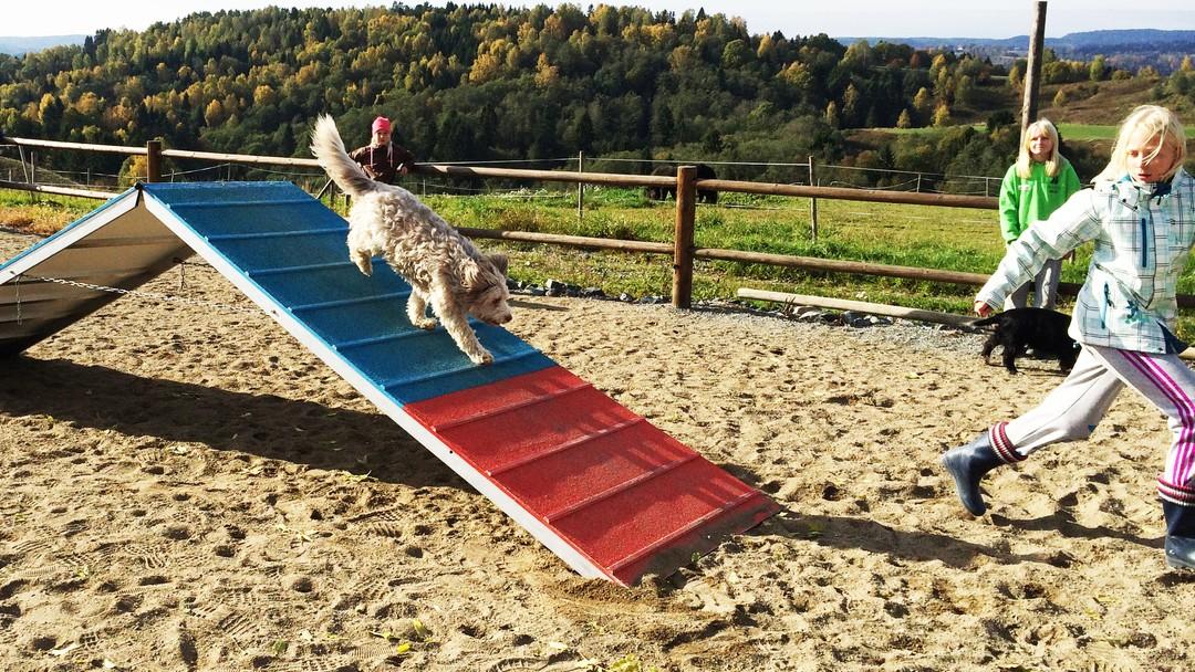 Hund og barn trener agility.