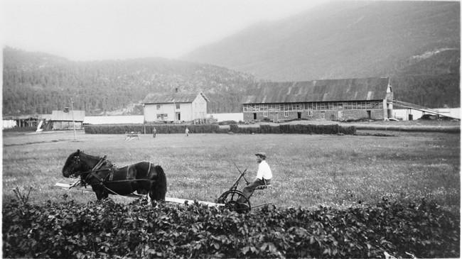 Arbeid på Tang på Hafslo tidleg på 1900-talet. Foto: Per Tang. Eigar: Fylkesarkivet i Sogn og Fjordane.