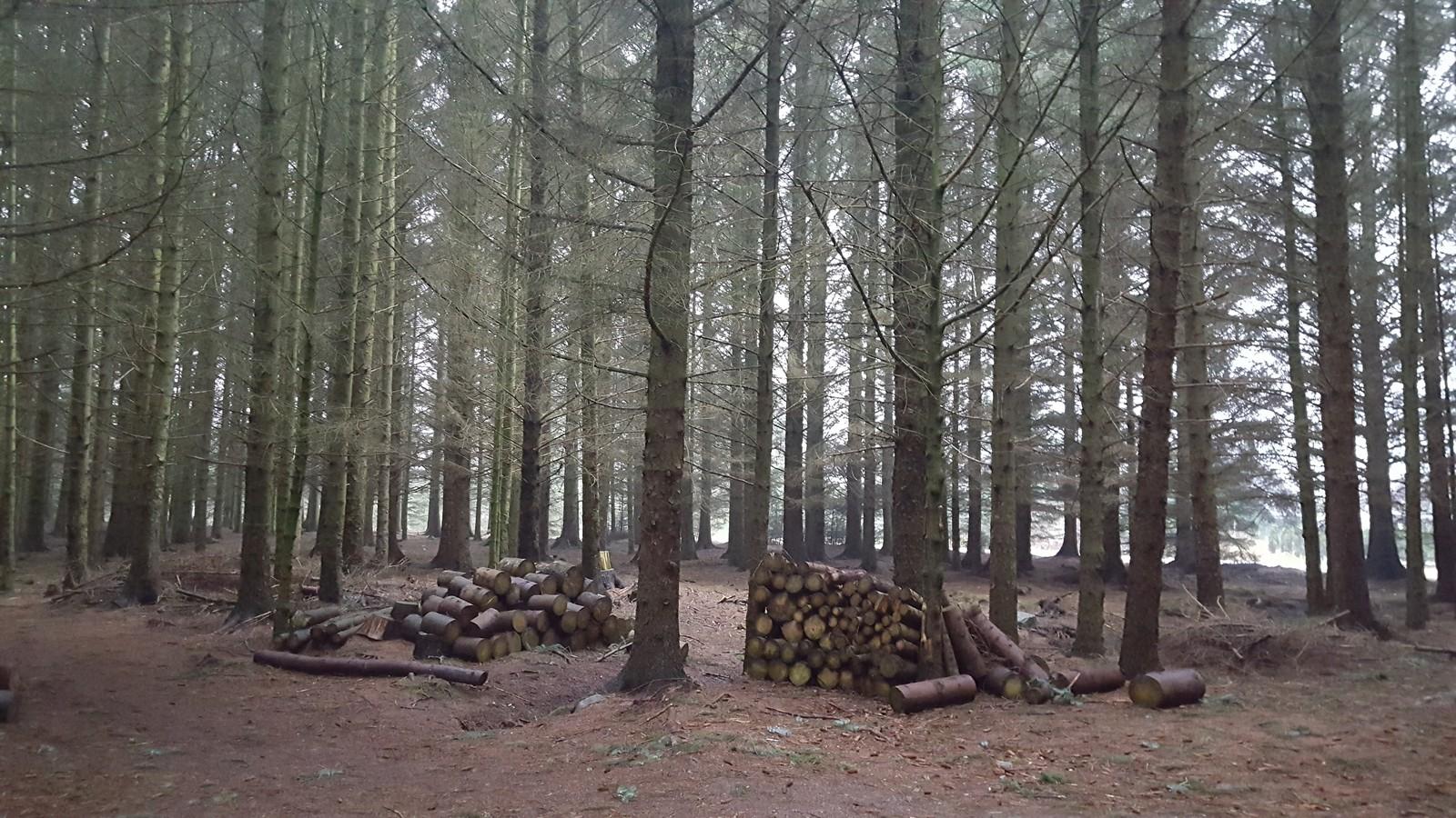 Hålandskogen i Sola.