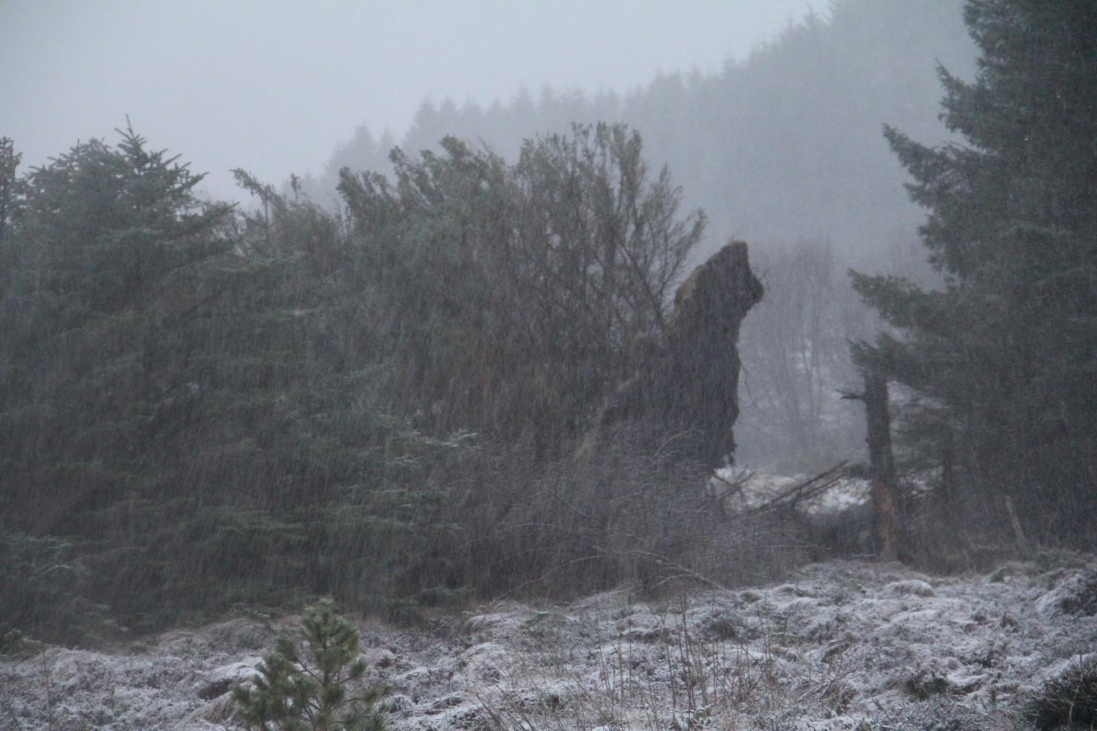 Stormen Tor på Haramsøy.