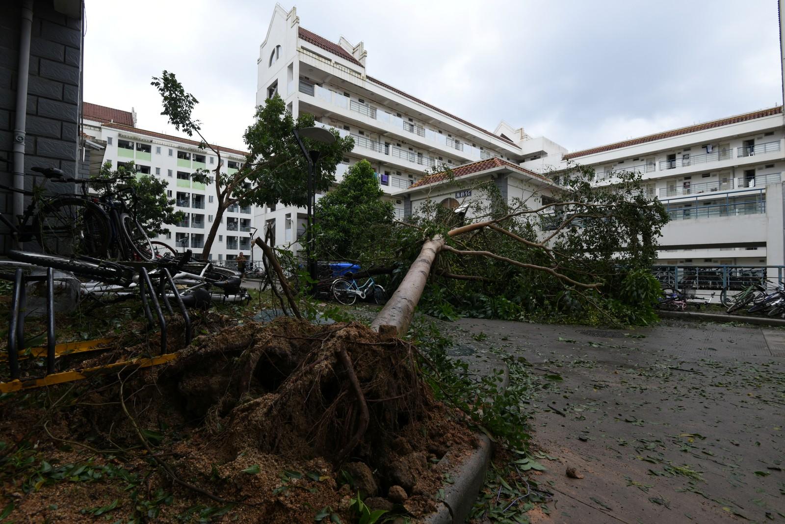 ØDELEGGELSER: Trær og vinduer ble meid ned av vinden.