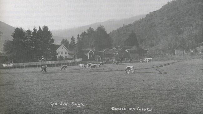 Offisersgarden Sjøtun rundt 1910. Foto: O. P. Fosse. Eigar: Vik lokalhistoriske arkiv.