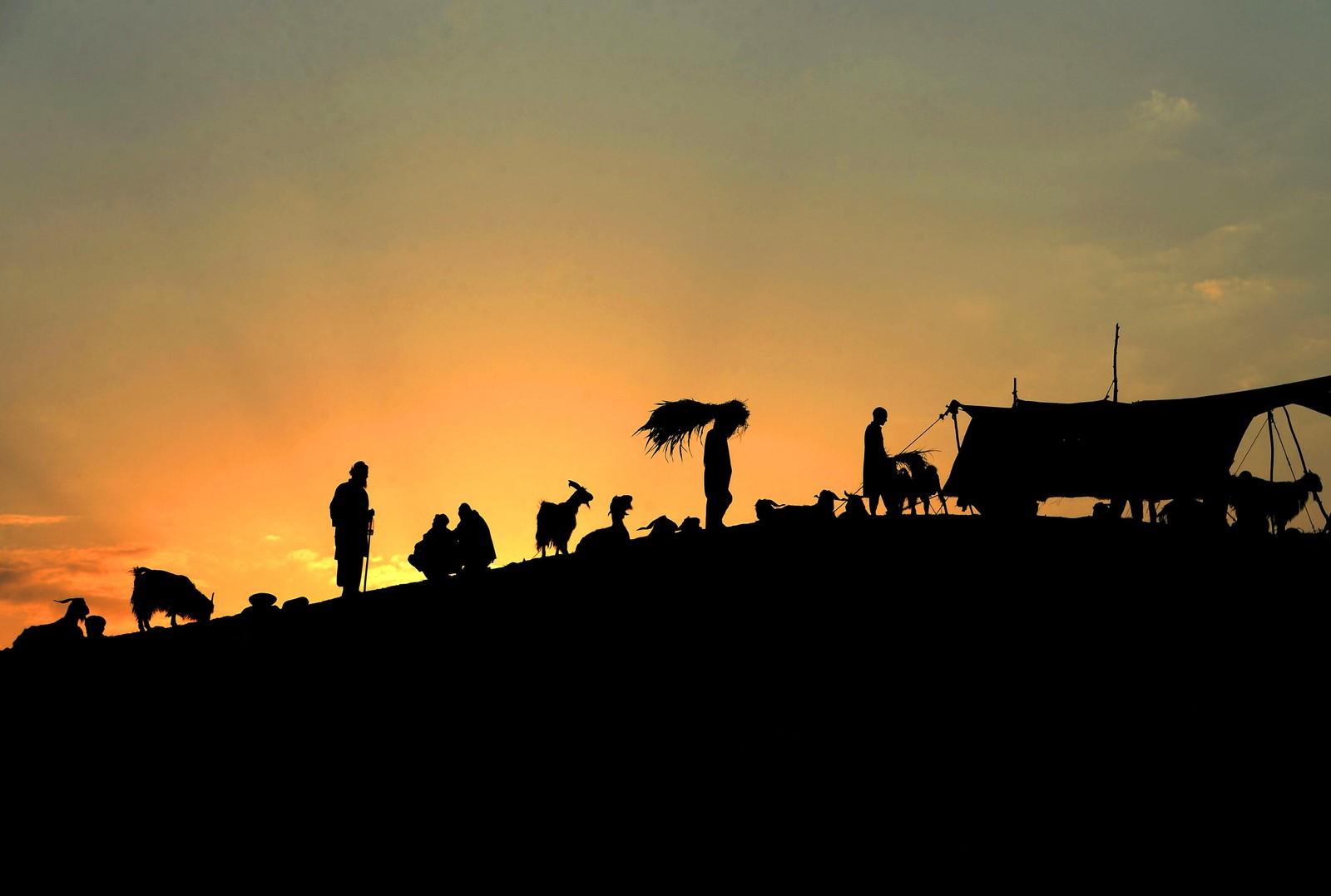 Husdyrsalg på marked utenfor Jalalabad i Afghanistan.