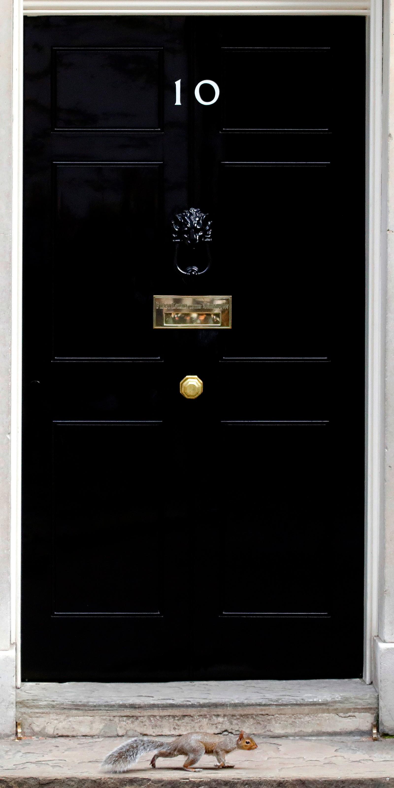 Et ekorn går forbi statsministerens dør i London.