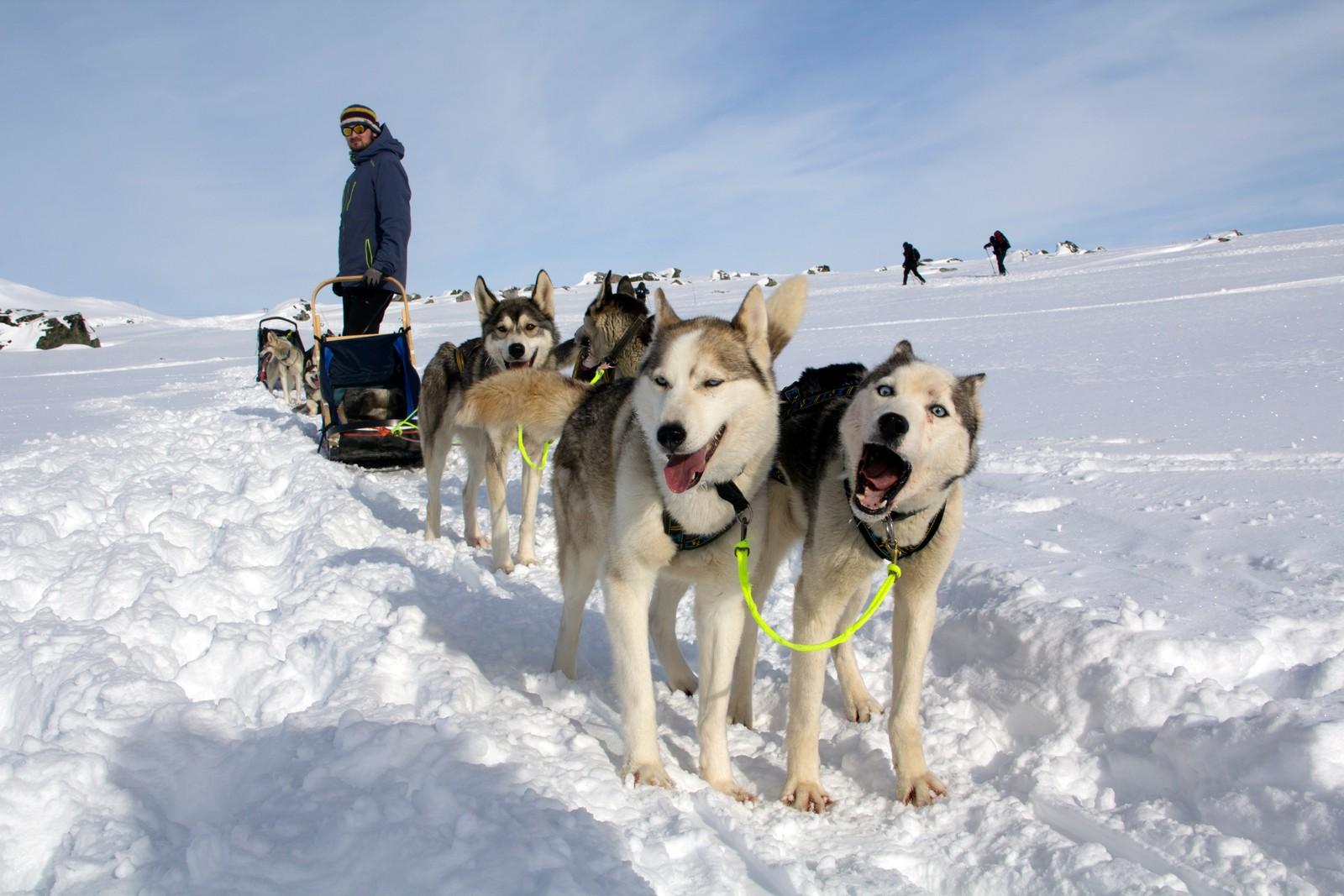 Per Tore Hove er innleid hundekjører til Yourways turer på Finse. I tillegg driver han sin egen opplevelsesbedrift, Fjeldfolk, i Naustdal.