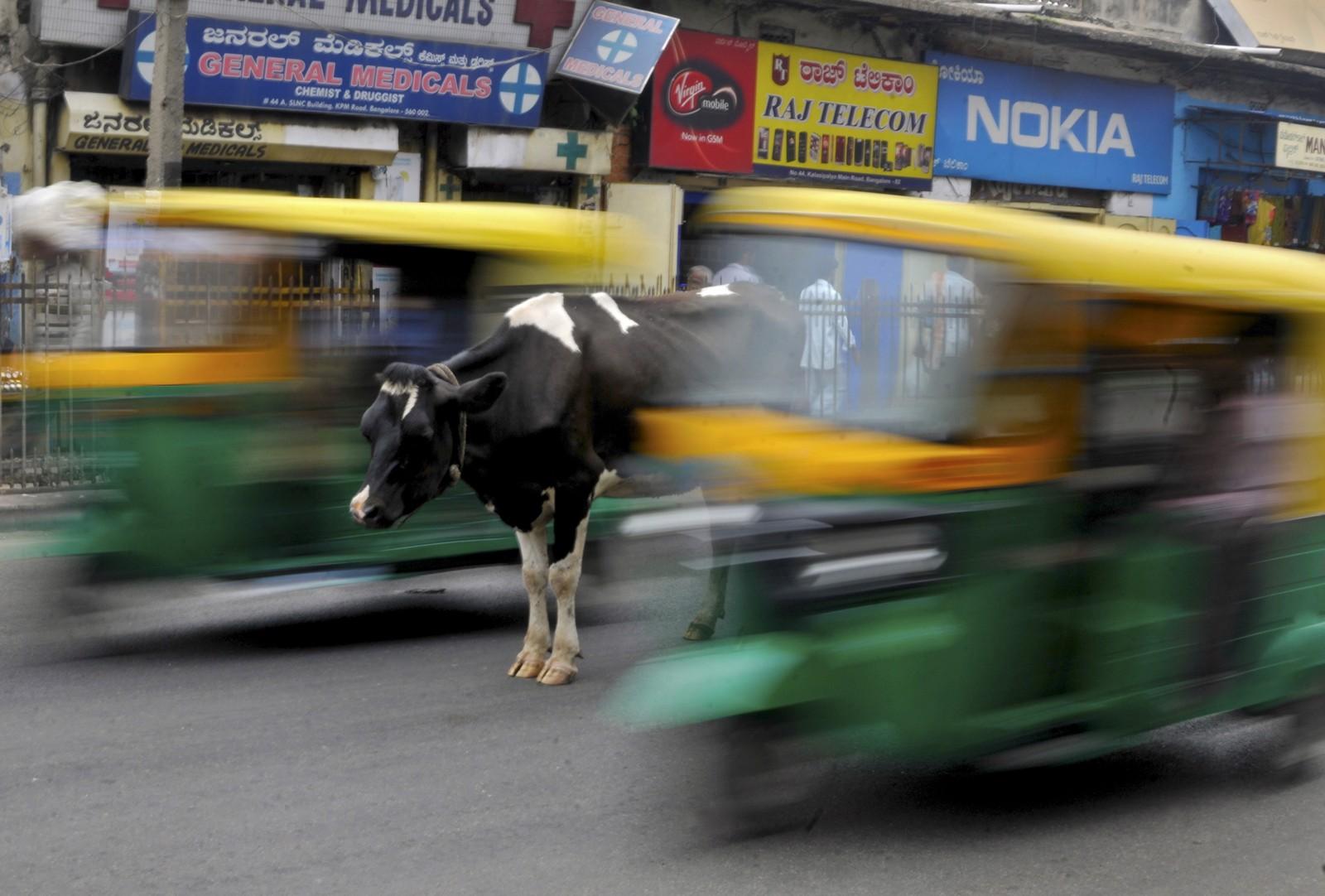 En ku står midt i en travel gate i Bengaluru, India 2. juni.