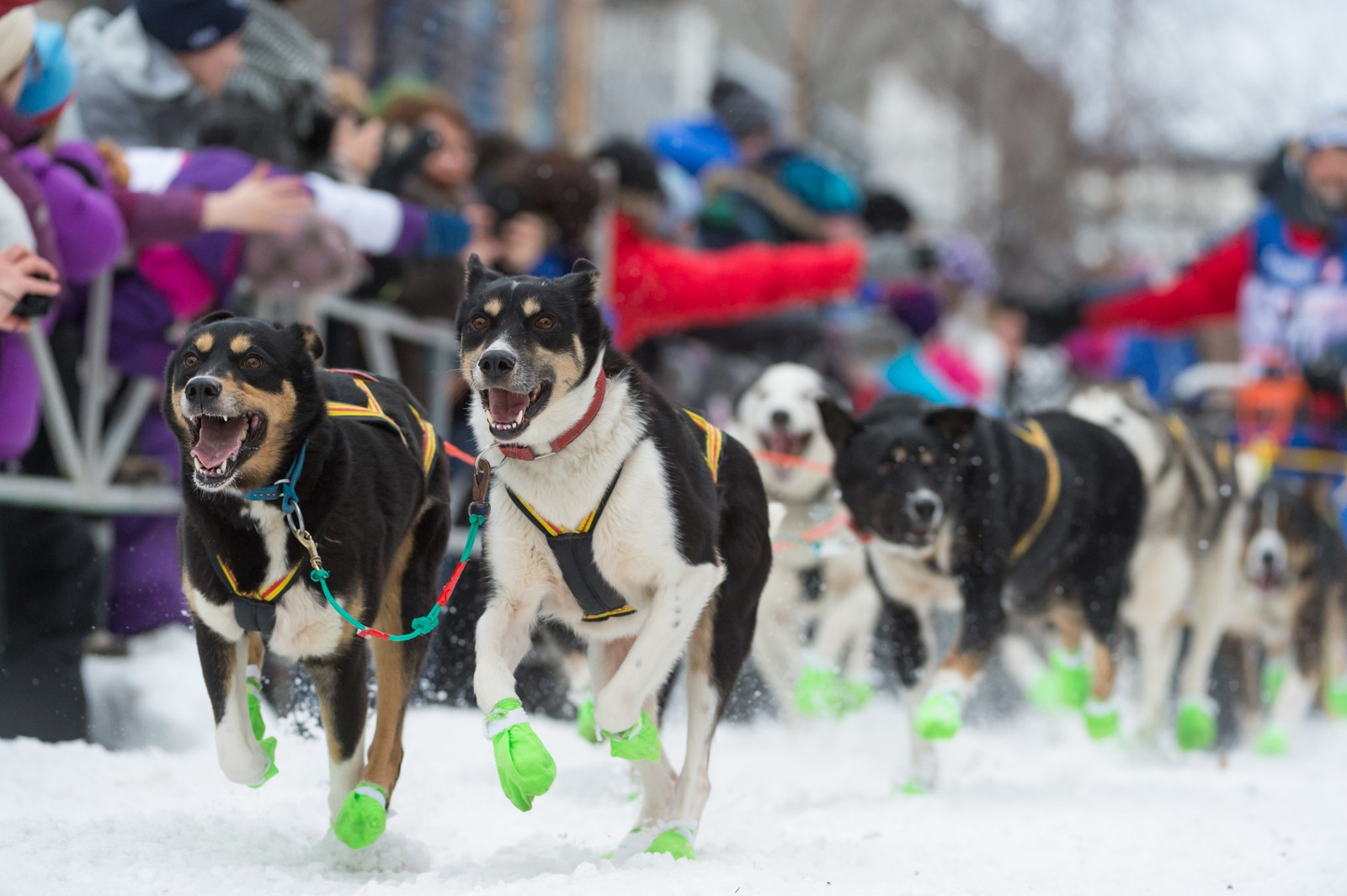 Hundene leder an ut av sentrum