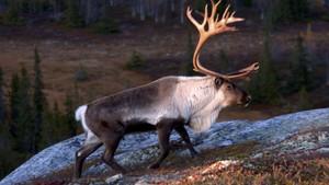 Norges villmarker: Fjellet