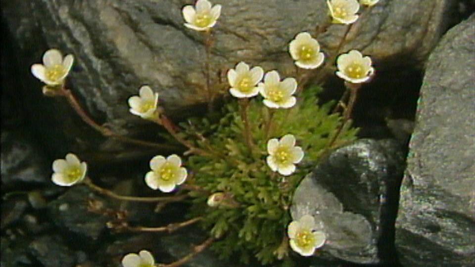 Fjellflora: Møte menneske og natur