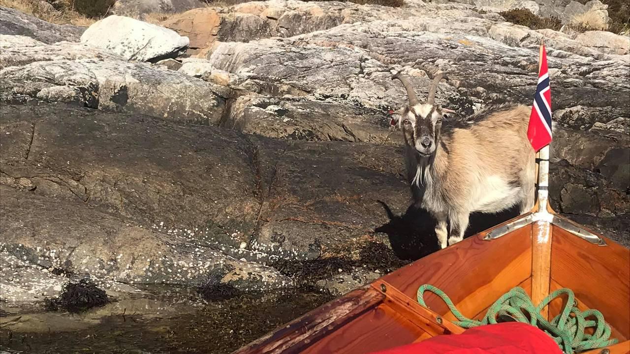 Vestøl traff mange folk under reisen, men også noen nysgjerrige dyr.