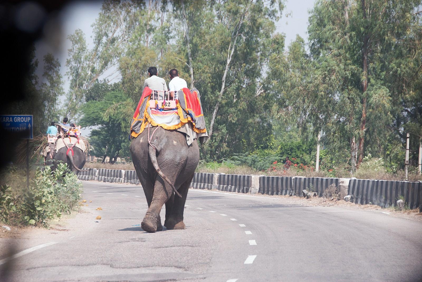 Elefantkolonnen vi møtte på veien til Virat Nagar, hvor Bal Ashram-senteret som årets vinner av Nobels fredspris driver, ligger.