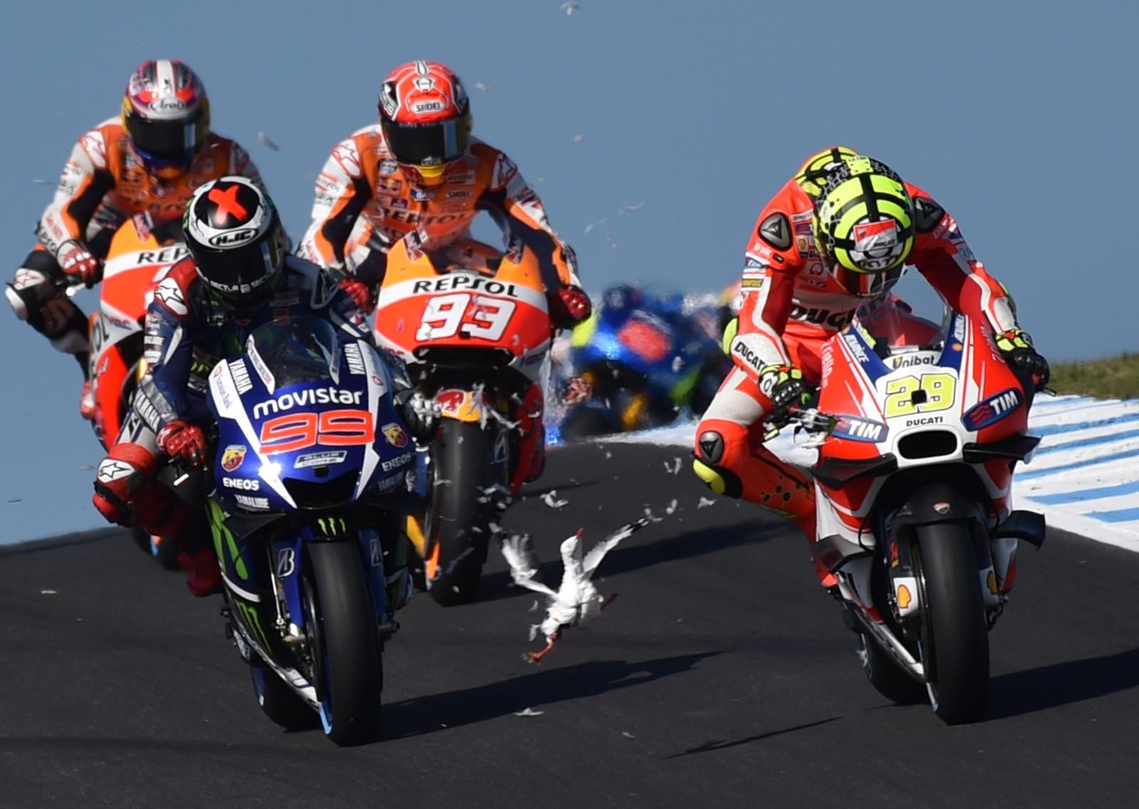 En måke forvillet seg midt inn i et fartsfylt felt under MotoGP på øya Phillip i Australia 18. oktober.