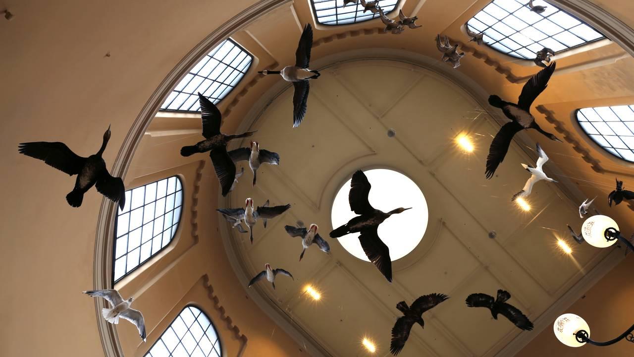 Naturhistorisk museum i Bergen åpner igjen