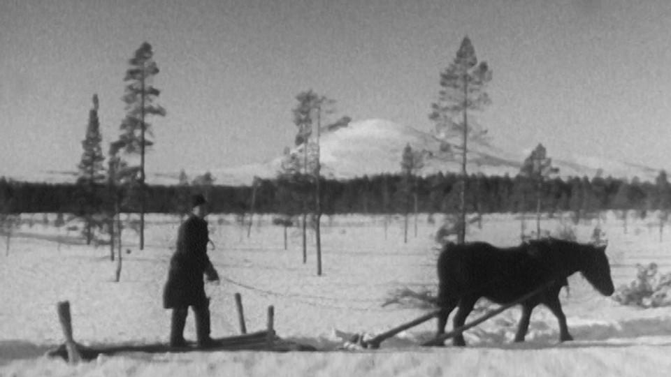 Skogsarbeidere i Femundmarka