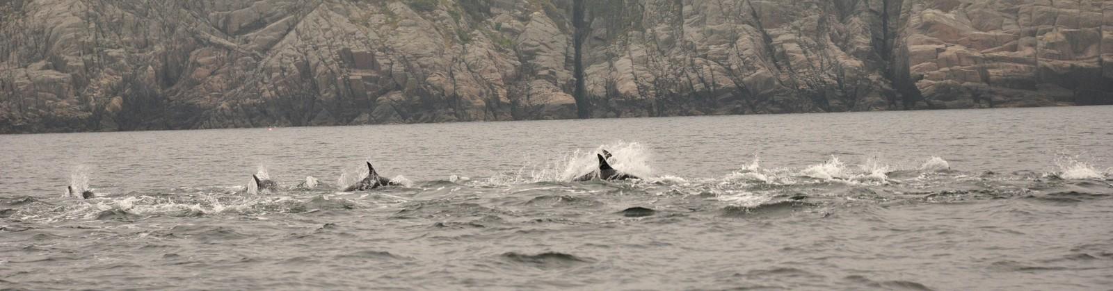 Båten med 60 hestekrefter hadde vanskeligheter med å følge delfinene, forteller Østhus.