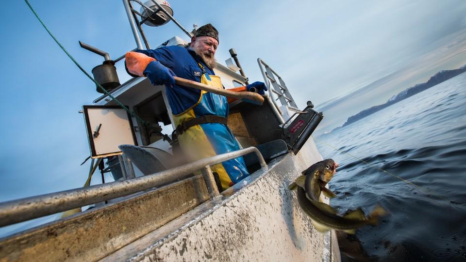 Skreifiske - torsk for torsk
