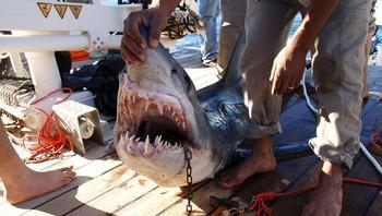 Turister angrepet av hai i Sharm el-Sheik