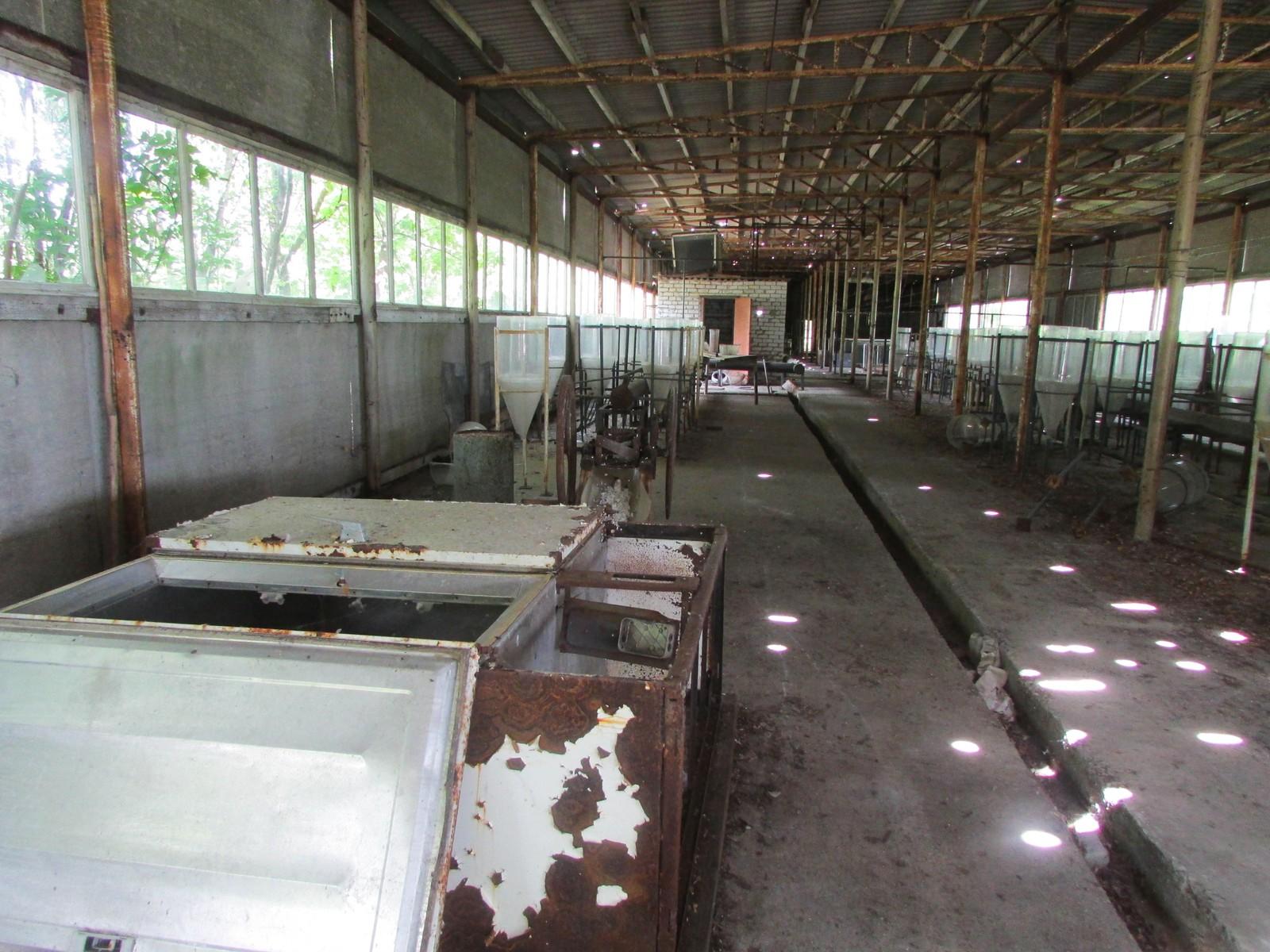 Forskerne har forlatt bygningen for over 20 år siden, men fortsatt forskes det på dyrelivet ved Tsjernobyl.