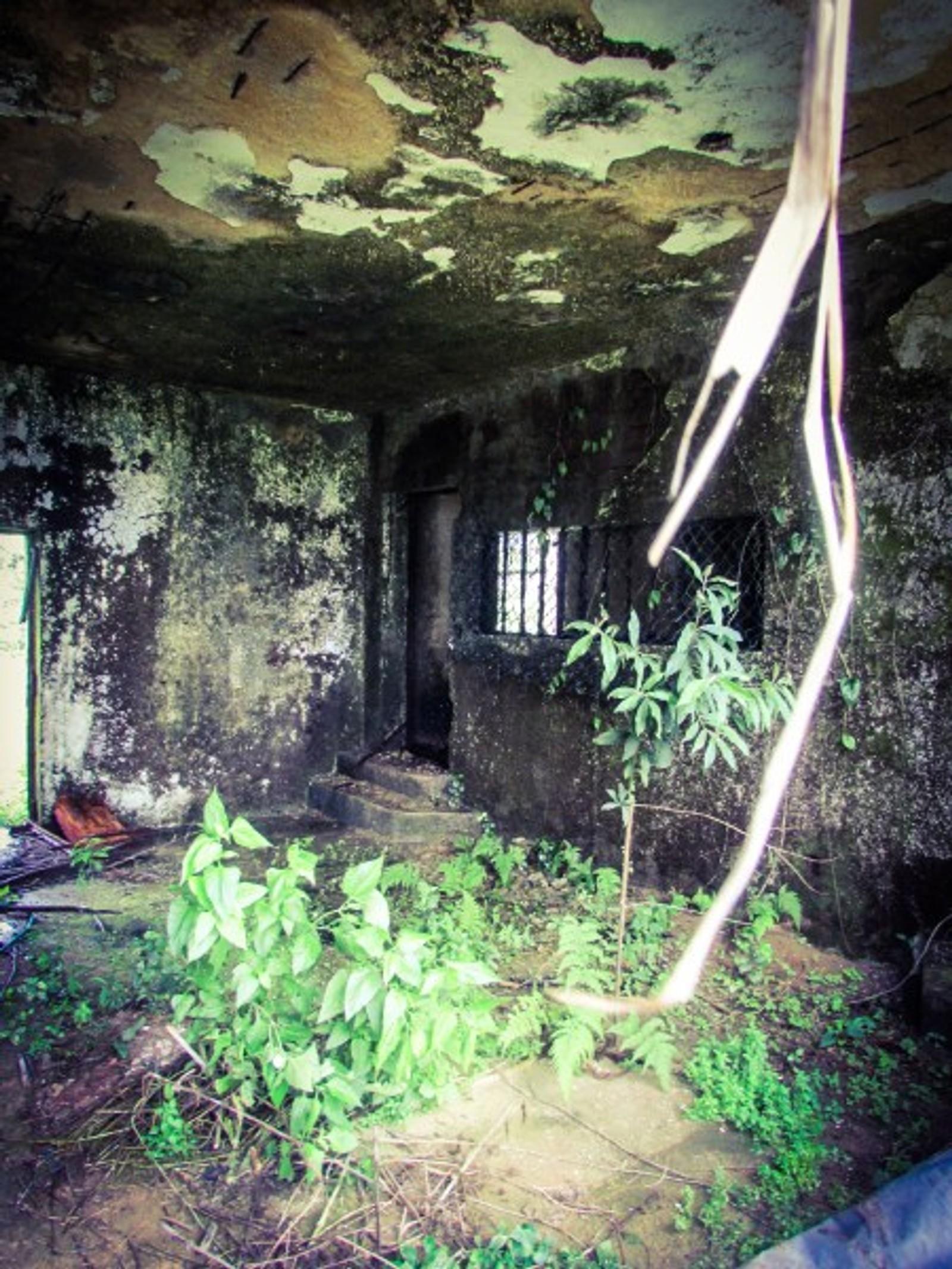 Inne i cellene i Cândido Mendes-fengselet er naturen i ferd med å ta over.