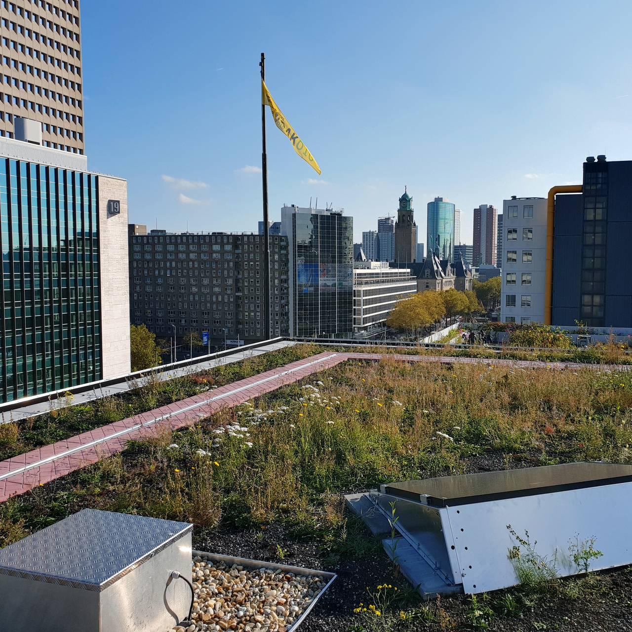 Smarttaket styres direkte av værmeldingen i Nederland. Det sørger for vann til de store hagene på taket under.