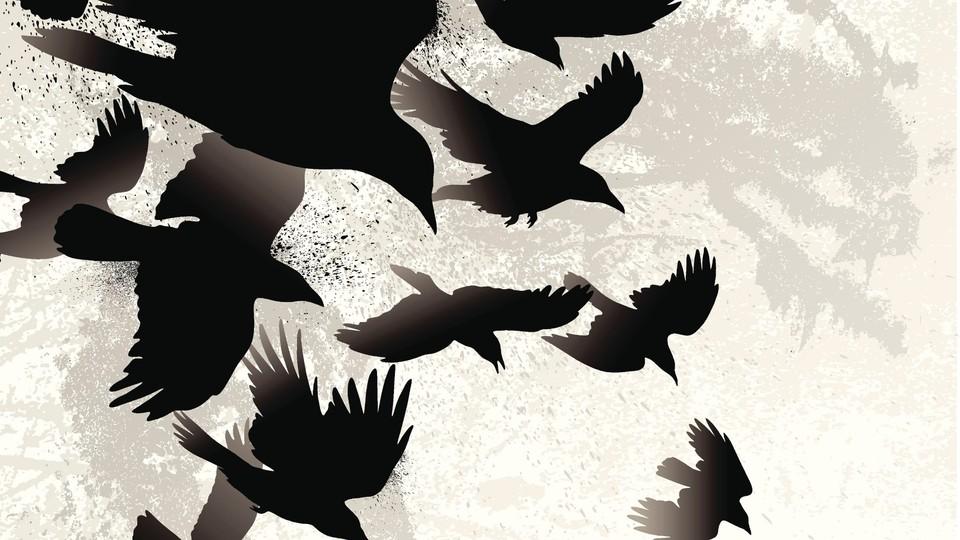 Nattfuglene