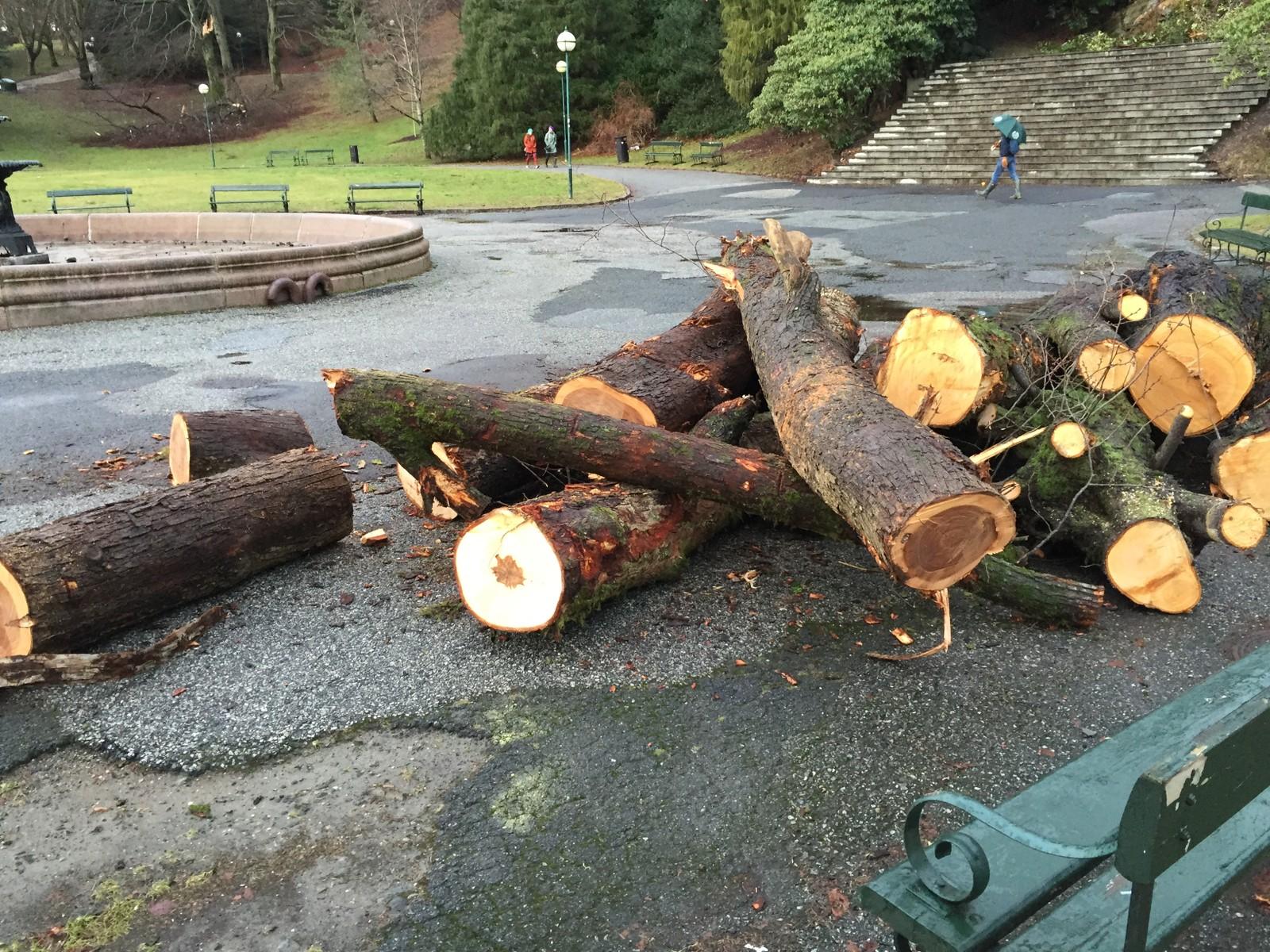 Trær som gikk over ende i Nygårdsparken i vinden er nå ryddet vekk.