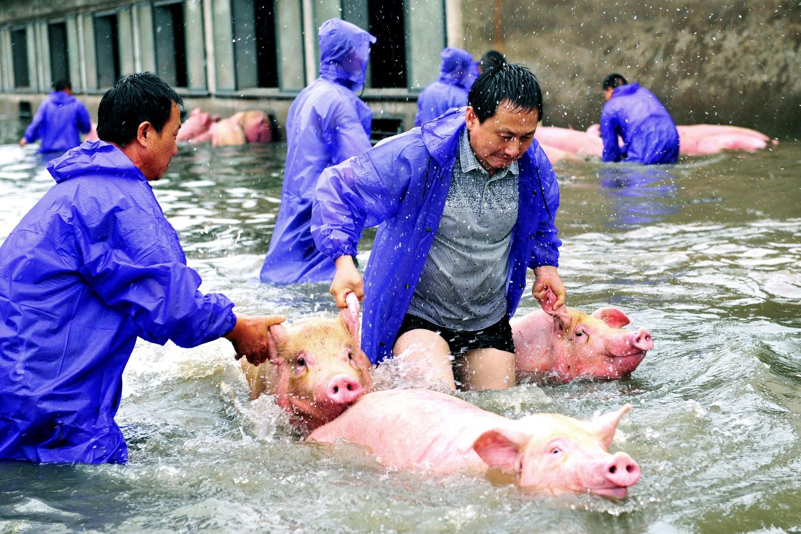 Griser trengte hjelp til å unnslippe en flom i Luàn i Anhui i Kina.