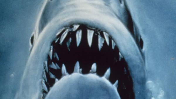 Haisommeren vi ikke badet