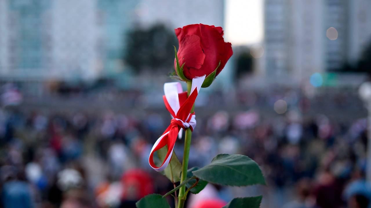 Rose med fargene fra det hviterussiske flagget knyttet rundt.