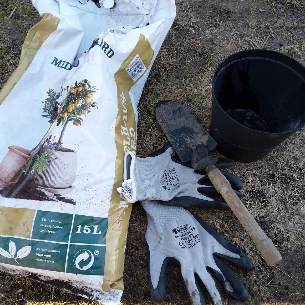 Potte om planter