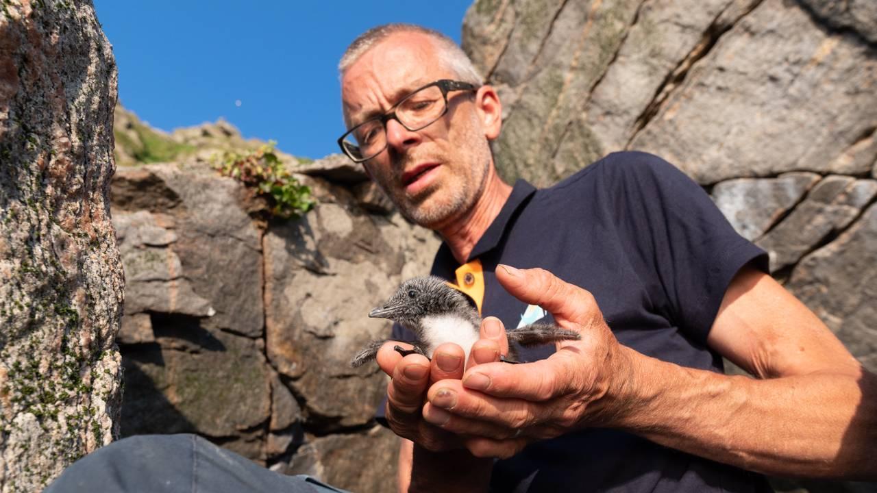 Forsker Geir Systad med lomviunge