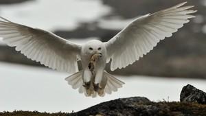 Norske naturperler