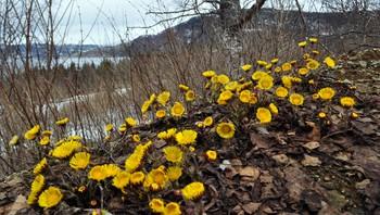 Nok en dag med fint vårvær på Hemnesberget.