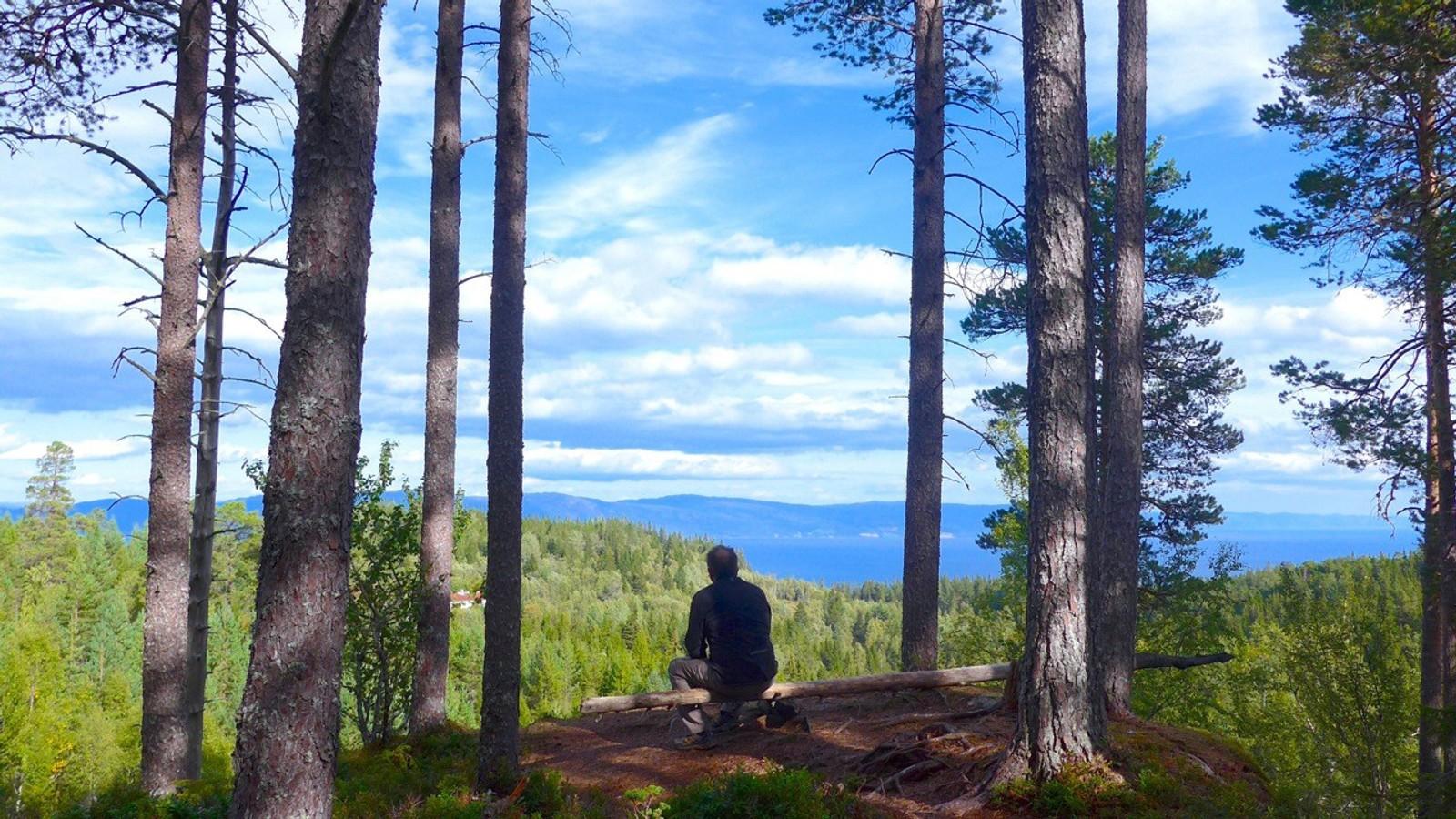 Utsikt mot Holstvollen og Trondheimsfjorden