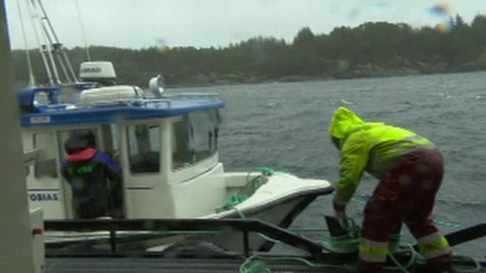 SIKRER FISKEANLEGGET: De ansatte på Telavåg Fiskeoppdrett sørger for at anlegg og båter er best mulig sikret før ekstremværet «Tor» treffer Hordaland og Vestlandet med full styrke i 14-tiden fredag.