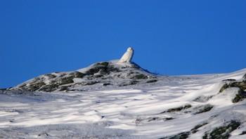 Snøugle i Rana