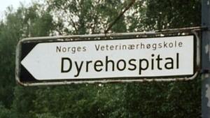 Vi besøker dyrenes rikshospital
