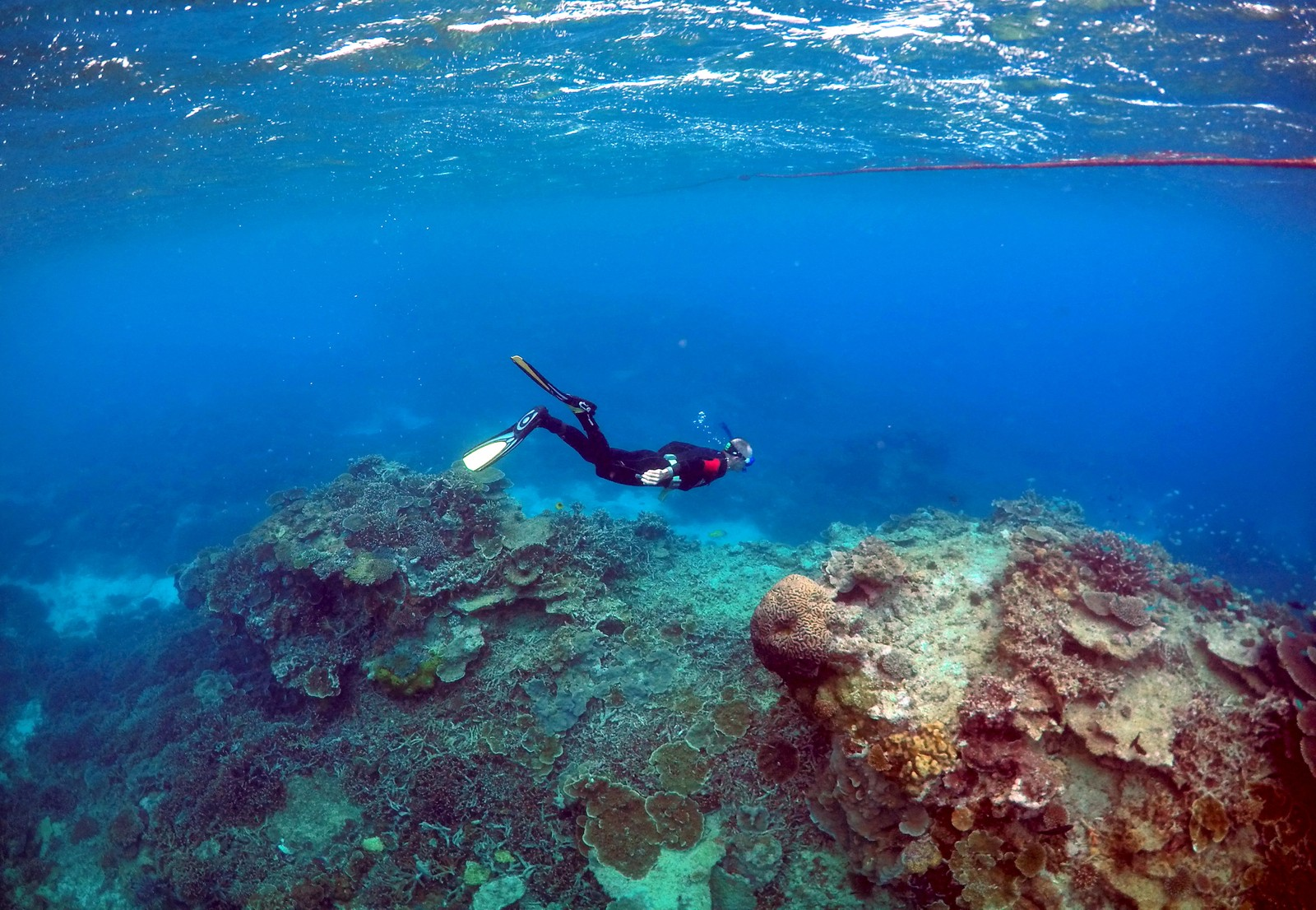 En dykker undersøker korallene på øya Lady Elliot i Australia. Great Barrier Reef er en stor turistatraksjon i Australia. Hvert år besøker rundt to millioner mennseker revet.