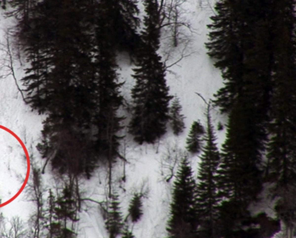 Ingen spor etter bjørn – NRK