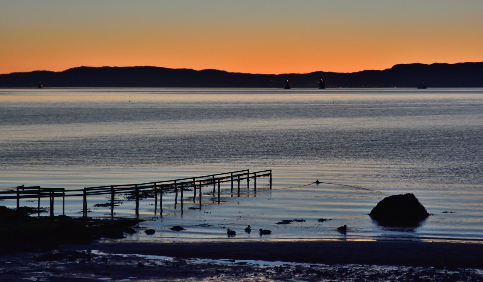 Noen ender svømmer i møte med NATOs minerydderflotilje ved Væreholmen