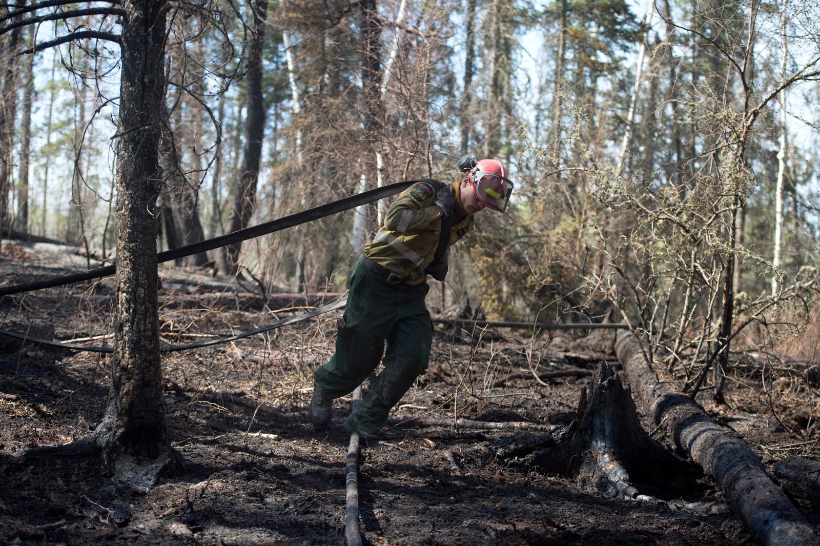 Et medlem av skogbranngruppen ved Albertas utmarksavdeling drar en brannslange gjennom den utbrente skogen i Parsons Creek-området utenfor Fort McMurray i Alberta, Canada 6. mai 2016.