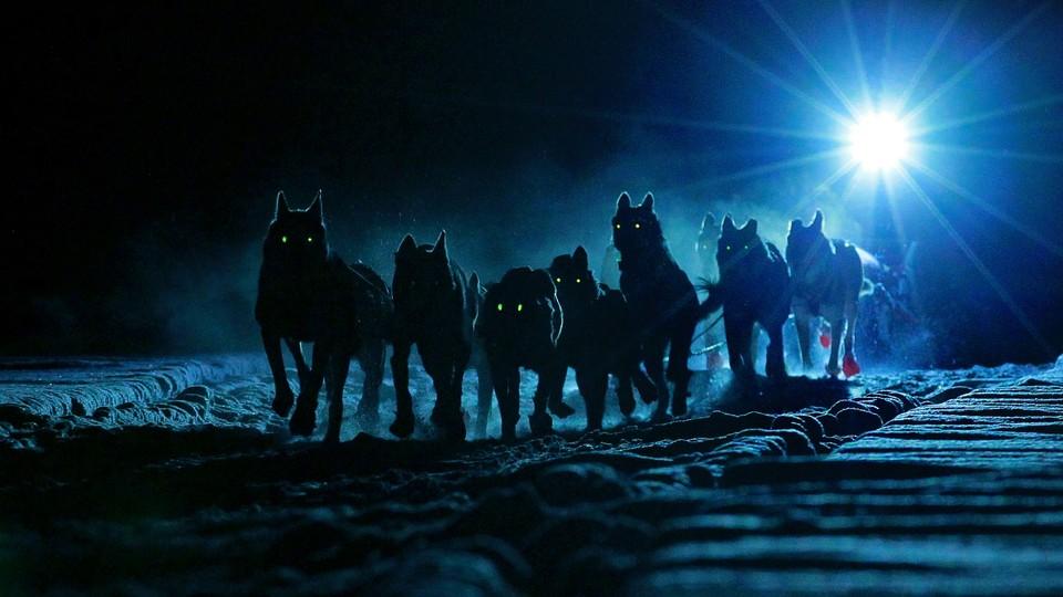 Monsen og hundene - sesong 4