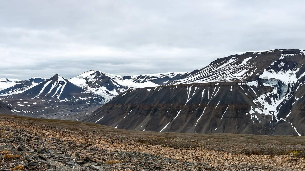 Breinosa på Svalbard
