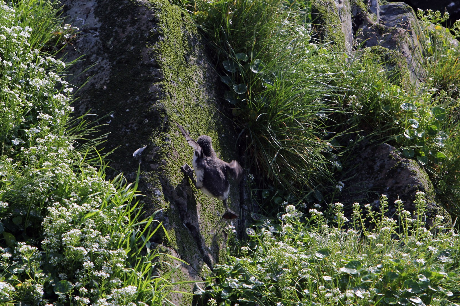 Ups. Det går over steiner og berg det siste stykket til sjøen.