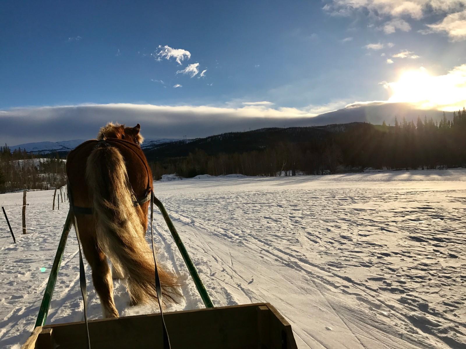 Hestetur i Namsskogan.