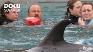 Dokusommer: Reddet av delfiner