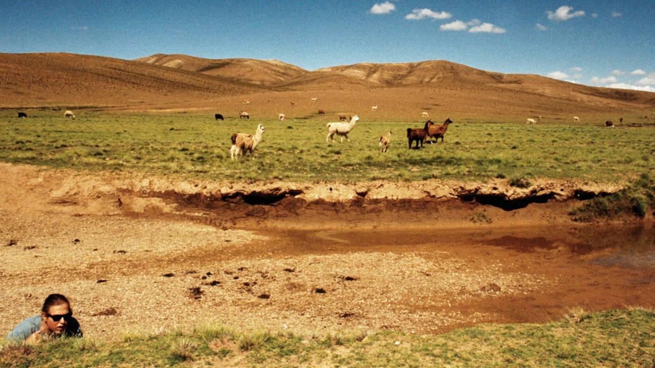 Vegard Kilvær med lamaer