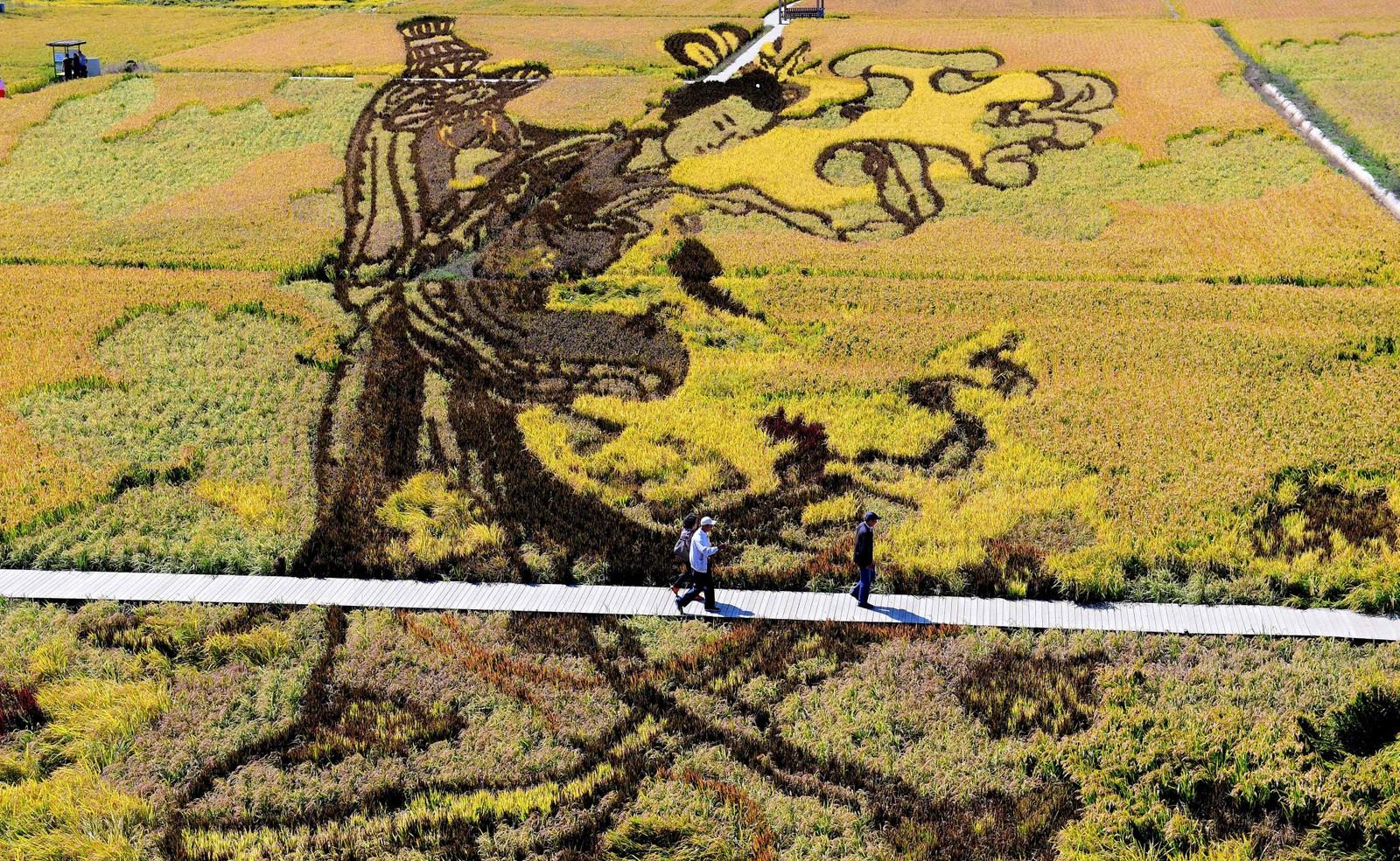 Lokale risbønder i Shenyang, Kina, håper disse kunstverkene skal føre til økt omsetning og turisme.